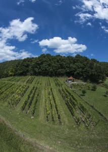 Bild A6 Weinanbau